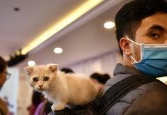 Cat Covid 2