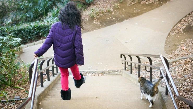 cat-follow-around