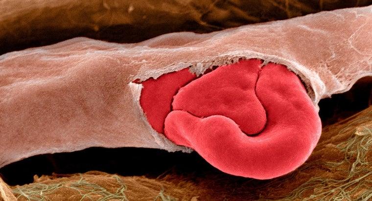 causes-broken-capillaries-nose