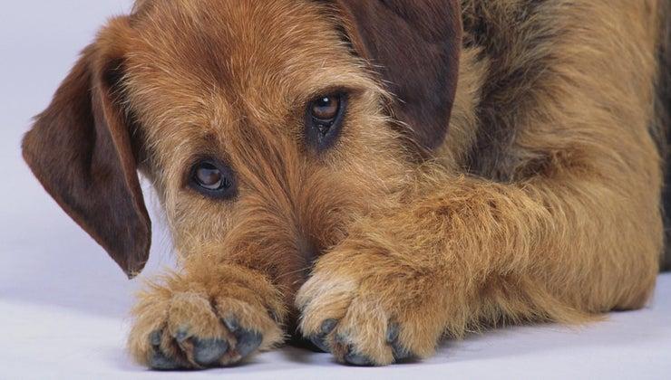 causes-dog-diarrhea-blood-mucous
