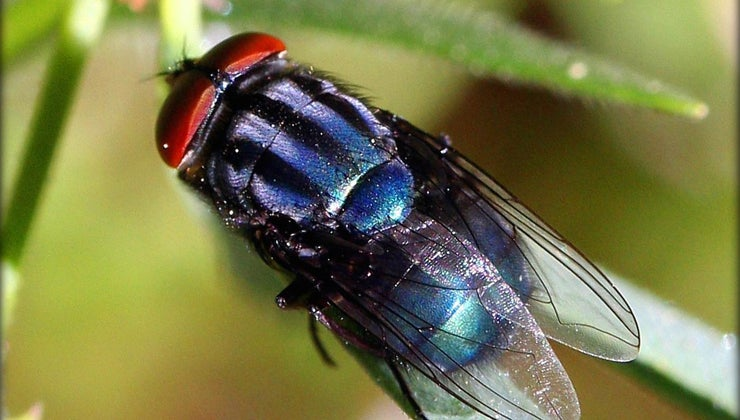 causes-house-flies