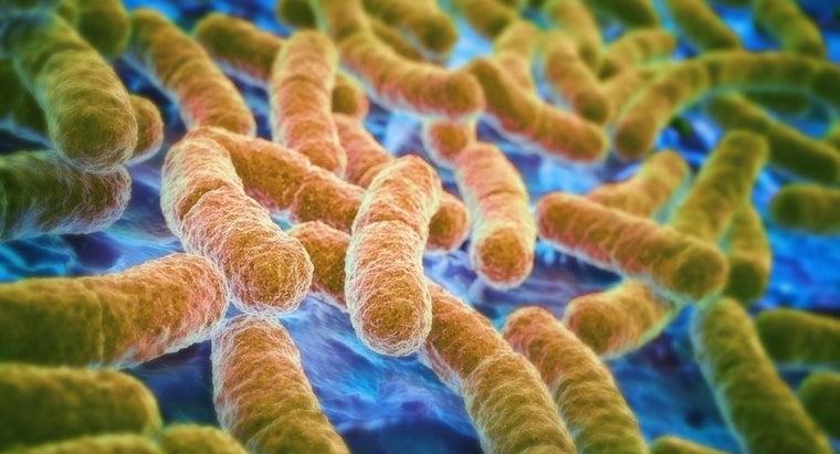 causes-symptoms-e-coli