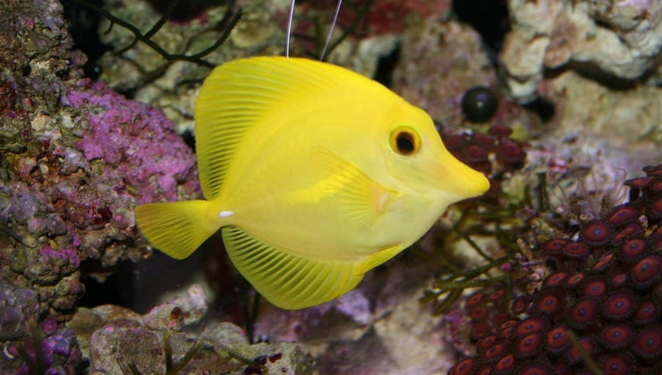 characteristics-fish