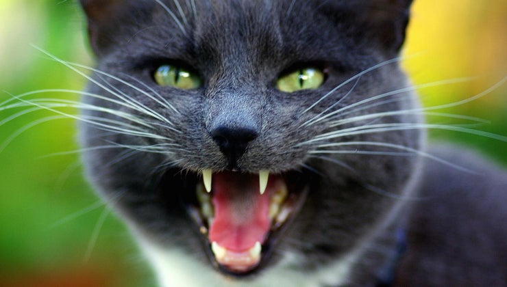 characteristics-predator