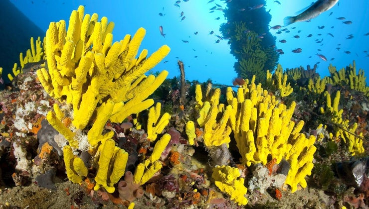 characteristics-sponges