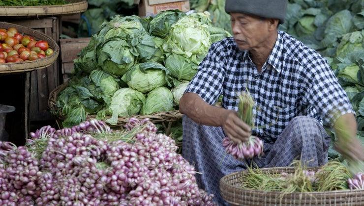 characteristics-traditional-economy