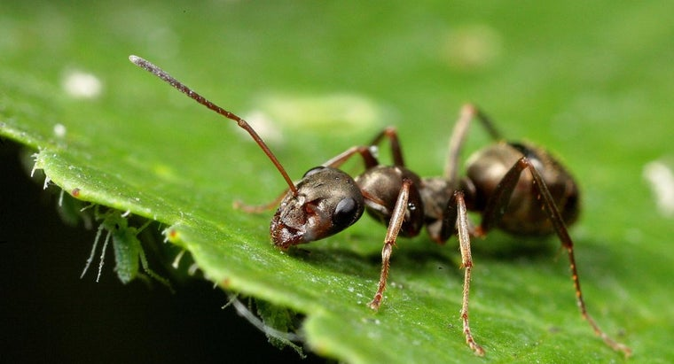 cinnamon-kill-ants