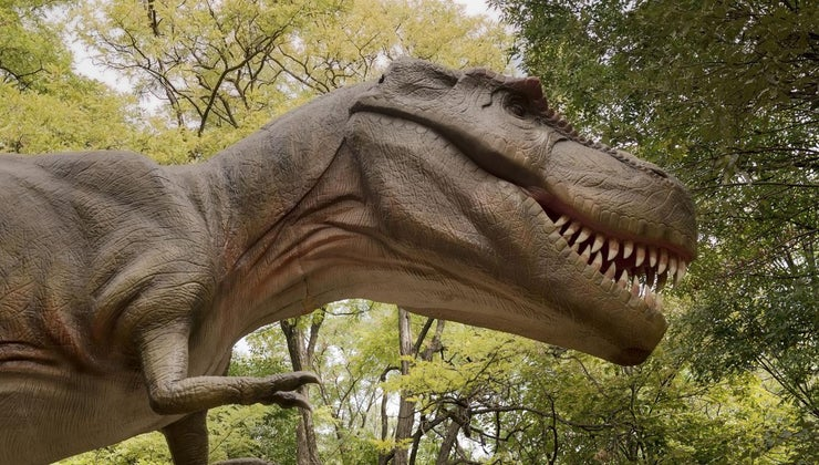 closest-relative-tyrannosaurus-rex