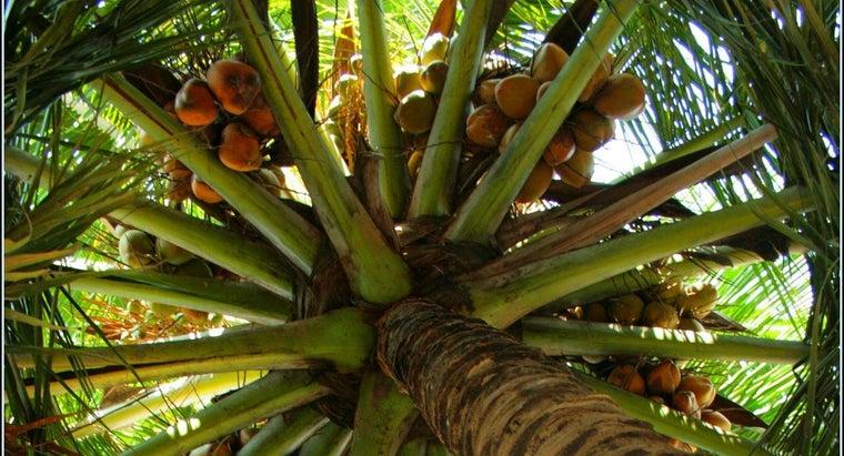coconut-seeds-disperse
