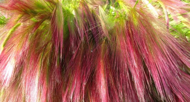 color-hair-using-matrix-hair-color