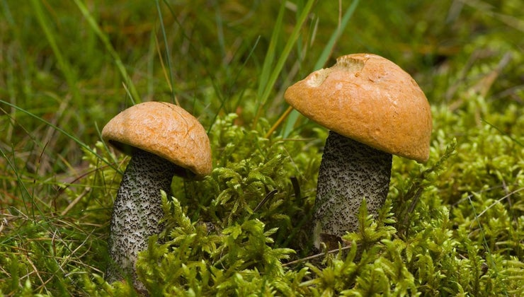 common-michigan-fall-mushrooms