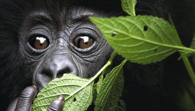 consumers-tropical-rainforest