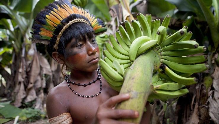 countries-three-biggest-rainforests-found