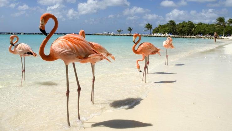 country-aruba-belong