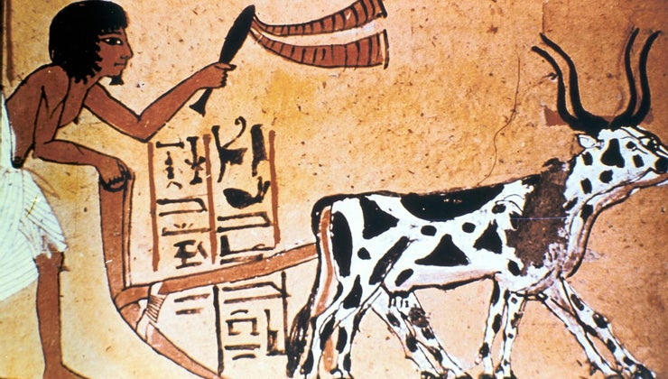 crops-did-ancient-egyptians-grow