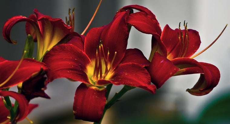 cut-back-daylilies