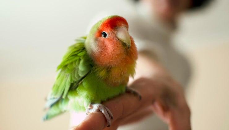 cute-names-pet-birds