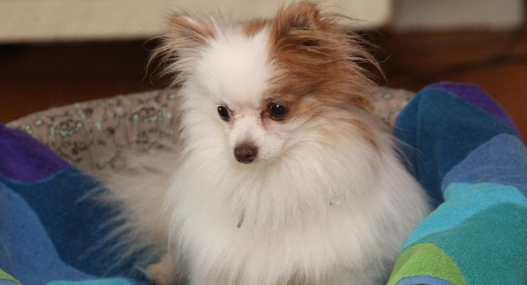 cute-names-small-female-dogs