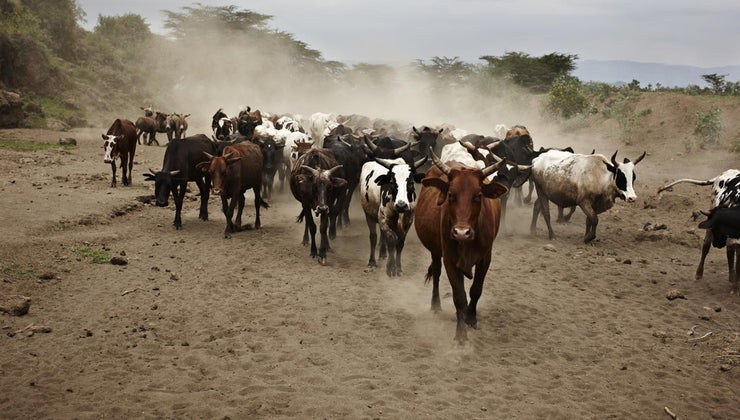 did-cattle-drives-end-late-1800s
