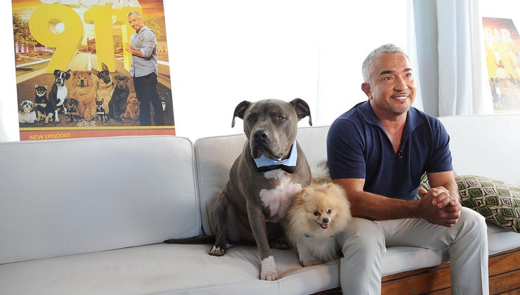 did-cesar-millan-divorce