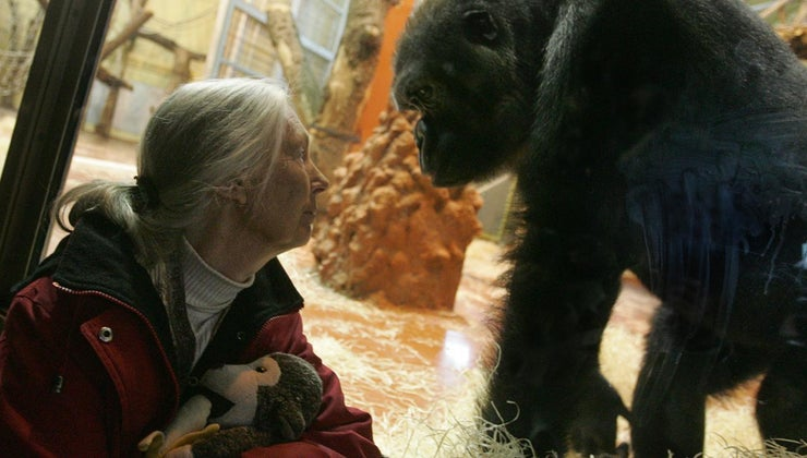 did-jane-goodall-die
