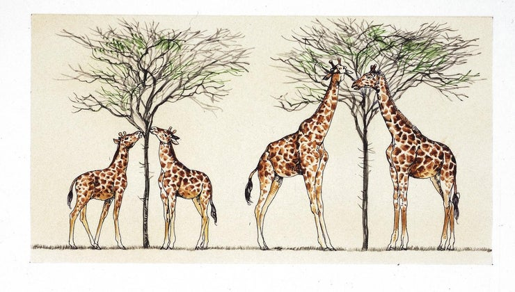 did-lamarck-explain-giraffes-long-necks