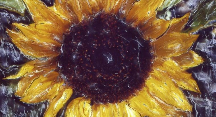 did-vincent-van-gogh-paint-sunflowers