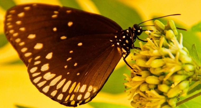 difference-between-pollination-fertilization