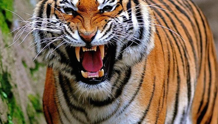 differences-between-teeth-carnivore-herbivore