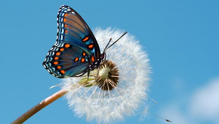 different-types-butterflies
