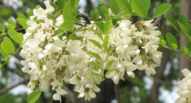 different-types-locust-trees