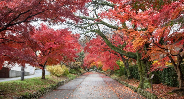 different-types-maple-trees