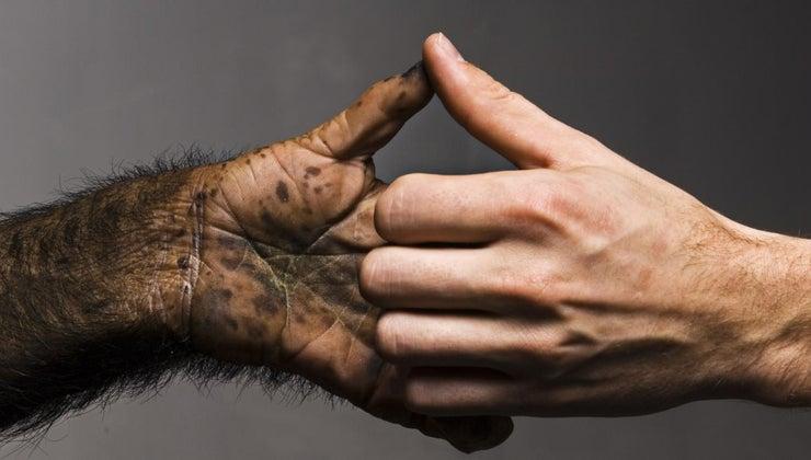 monkeys-opposable-thumbs