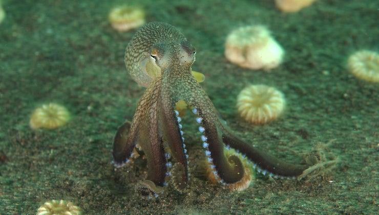octopuses-teeth