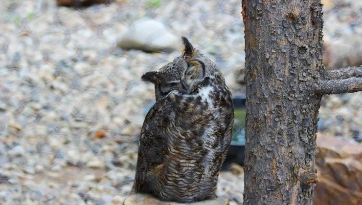 owls-hibernate