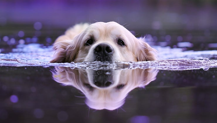 dog-s-strongest-sense