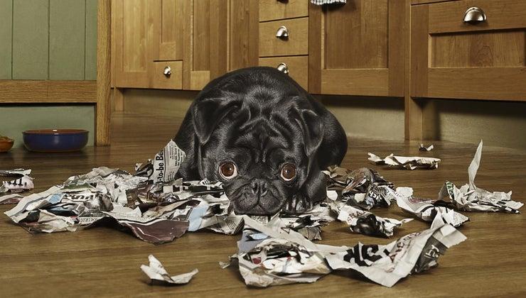 dog-eat-paper