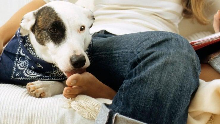 dogs-lick-human-feet