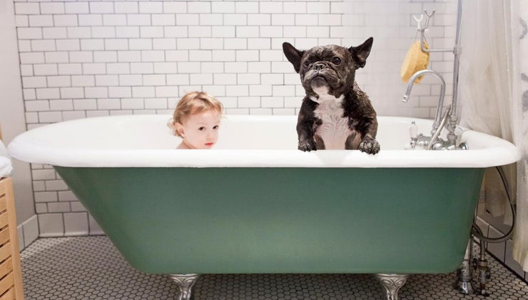 dogs-smell-even-after-having-bath
