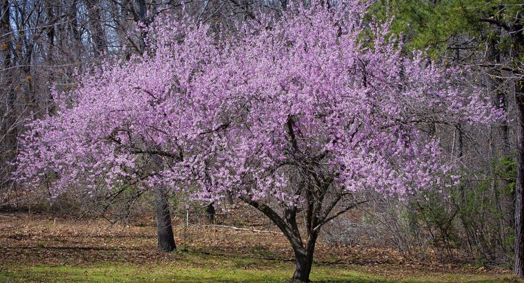 dogwood-trees-smell
