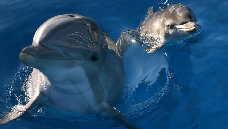 dolphins-live