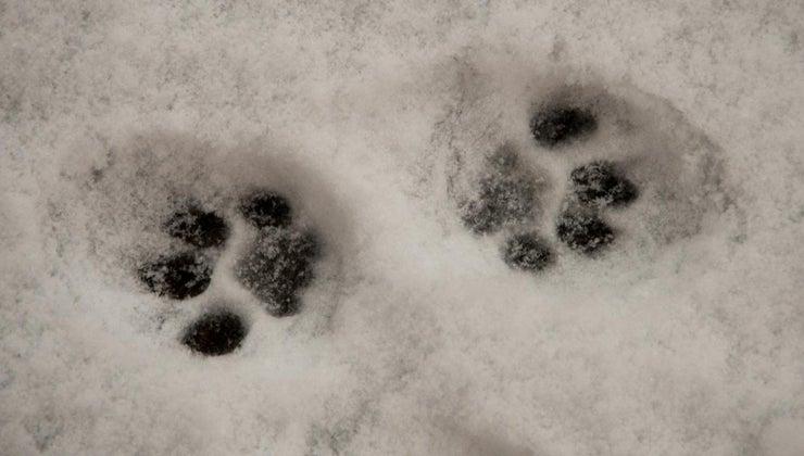 draw-cat-paw-prints