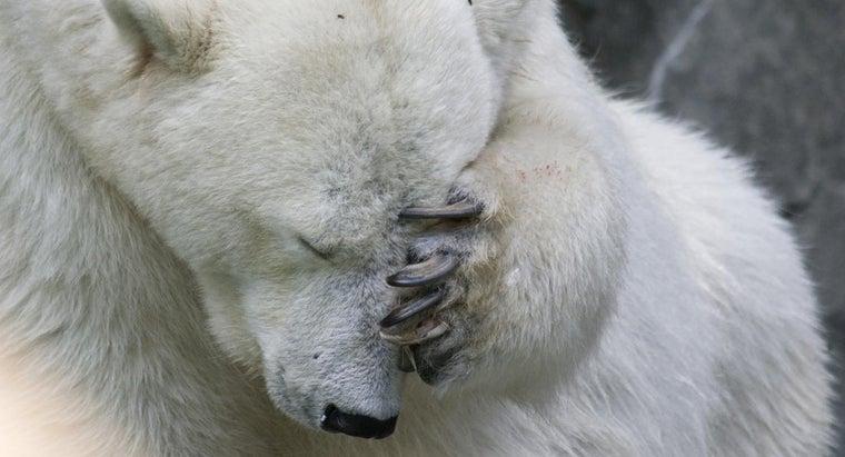 effects-bear-spray-humans