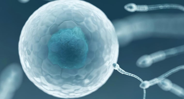egg-larger-sperm