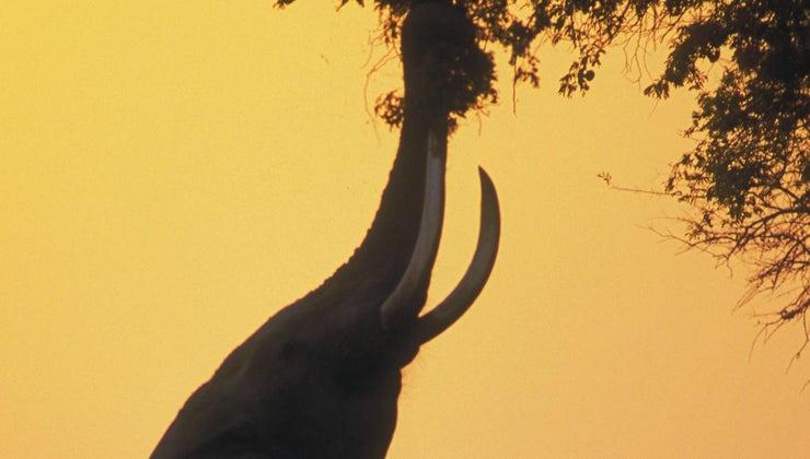 elephants-eat