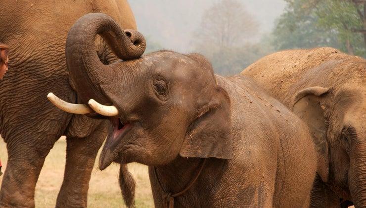 elephants-live