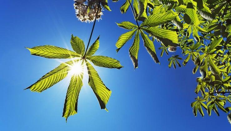energy-photosynthesis-originate