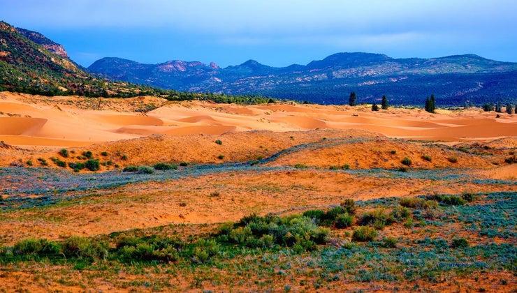 example-mutualism-desert