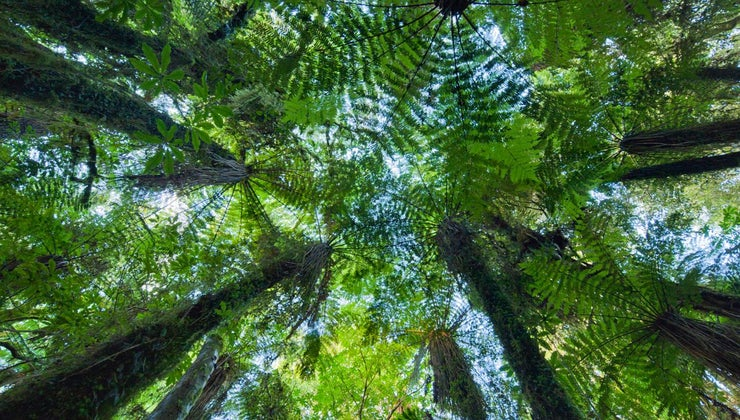example-mutualism-rainforest