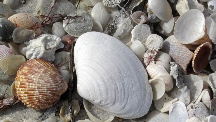 examples-mollusks